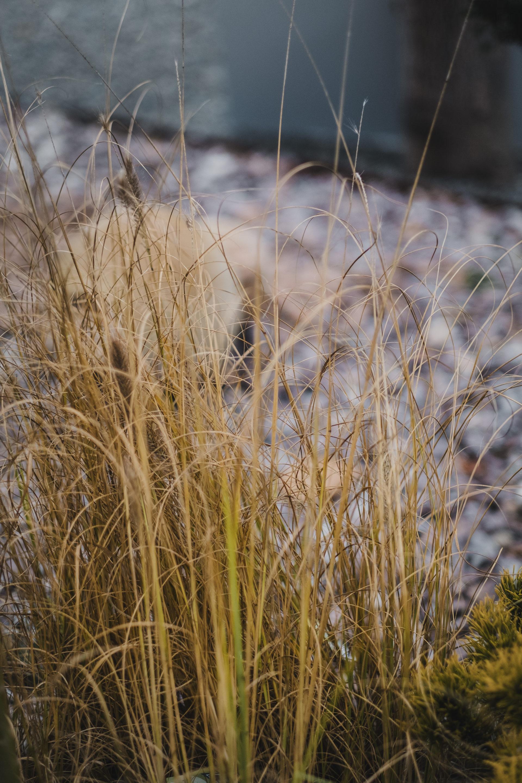 pépinière du marais - vert design